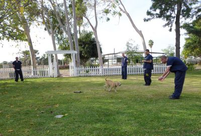 Dog with inmate trainers