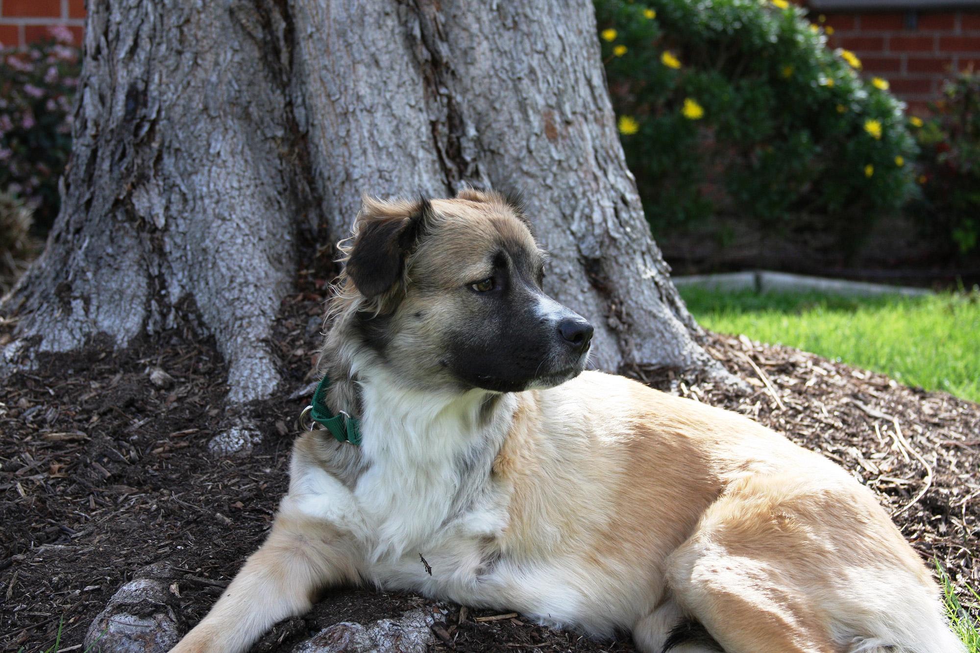 Holly the dog